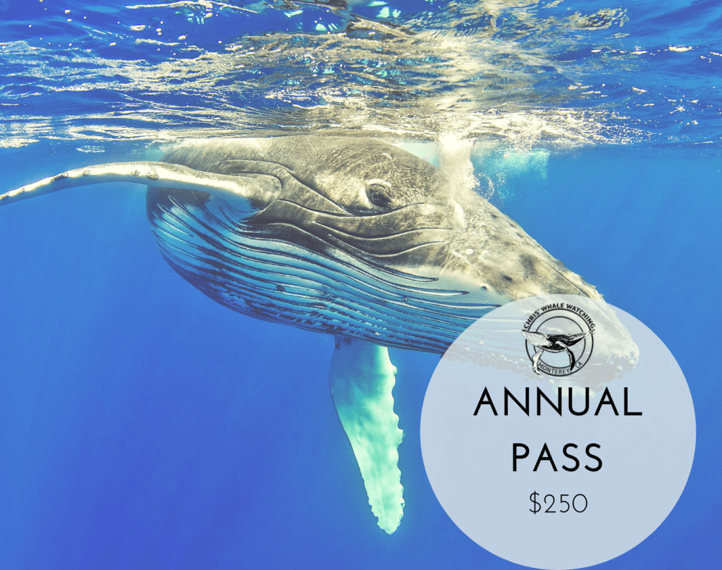 ANNUALPASS